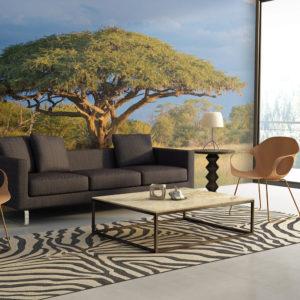 Papier Peint Panoramique Acacia africain - Parc national Hwange