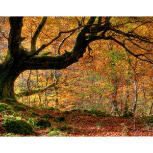forêt et feuilles