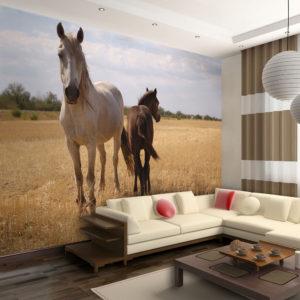 Papier Peint Panoramique Cheval et poulain