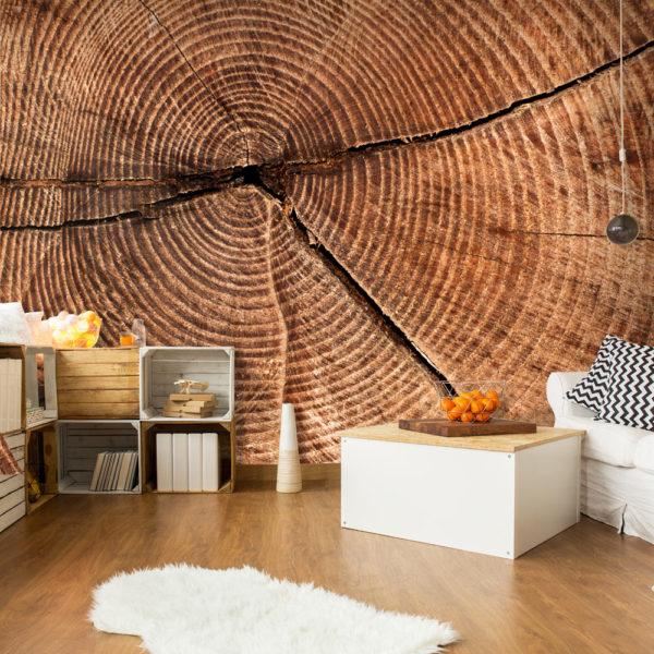 Papier Peint Panoramique Coupe d'un tronc d'arbre