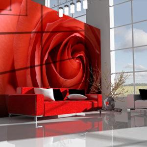 Papier Peint Panoramique L'éveil de la rose
