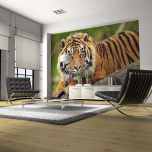 Papier Peint Panoramique Tigre de Sumatra