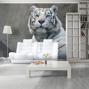 Papier Peint Panoramique Tigre du Bengale au zoo