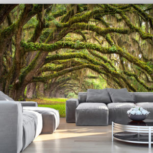 Papier Peint Panoramique Tree embrace