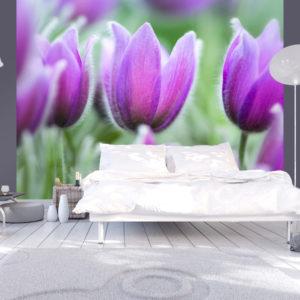 Papier Peint Panoramique Tulipes violettes au printemps