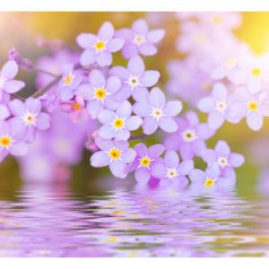 Papiers peints > Fleurs > Autres fleurs