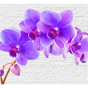 Tapisserie murales Fleurs > Orchidées