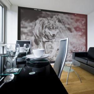 Papier Peint Panoramique loup - photographie