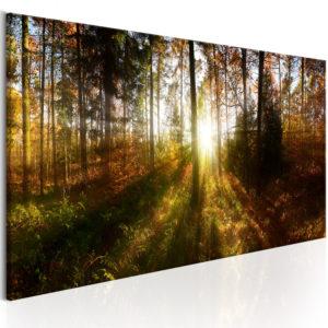 Tableau - Beautiful Forest fait partie des tableaux murales de la collection de worldofwomen découvrez ce magnifique tableau exclusif chez nous