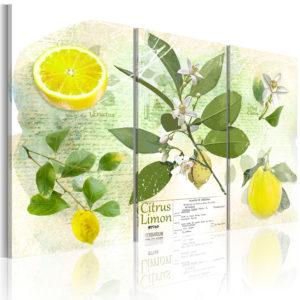 Tableau - Fruit: lemon fait partie des tableaux murales de la collection de worldofwomen découvrez ce magnifique tableau exclusif chez nous