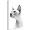 Tableau - Hairless Cat (1 Part) Vertical fait partie des tableaux murales de la collection de worldofwomen découvrez ce magnifique tableau exclusif chez nous