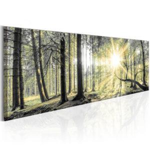 Tableau - Morning Forest fait partie des tableaux murales de la collection de worldofwomen découvrez ce magnifique tableau exclusif chez nous